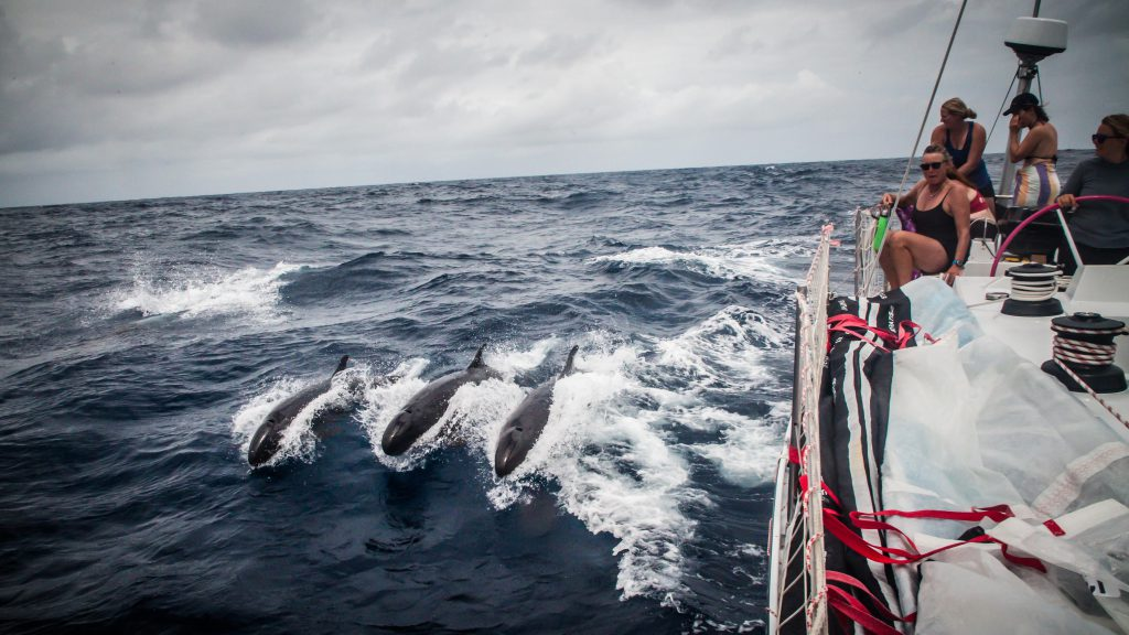 Three false killer whales breach next to Maiden. The crew look over the side.