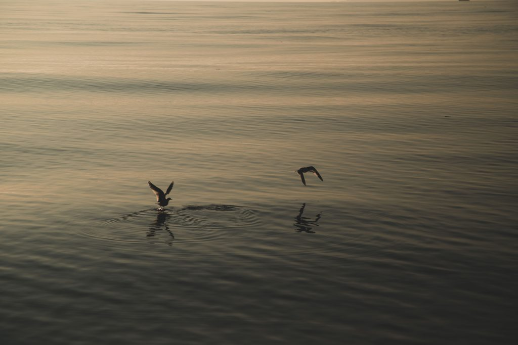 Two birds fly close to the water in low light